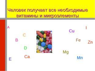Человек получает все необходимые витамины и микроэлементы А Сu Fe Mg B C I Zn