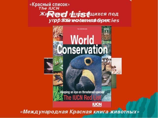 «Красный список» Животных находящихся под угрозой исчезновения «Международная...