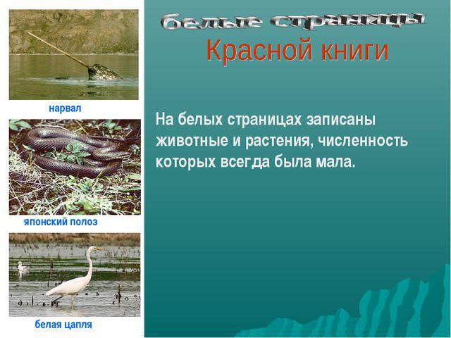 На белых страницах записаны животные и растения, численность которых всегда б...
