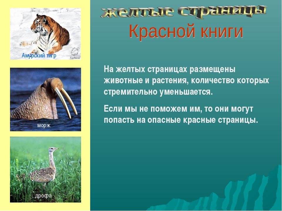 На желтых страницах размещены животные и растения, количество которых стремит...