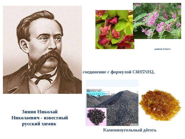 Зинин Николай Николаевич - известный русский химик растение Indigofera Каменн...