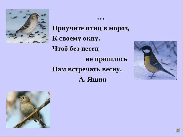 … Приучите птиц в мороз, К своему окну. Чтоб без песен не пришлось Нам встреч...