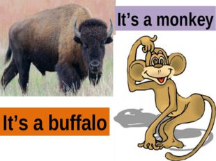 It's a buffalo It's a monkey