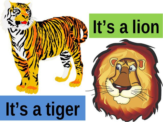 It's a tiger It's a lion
