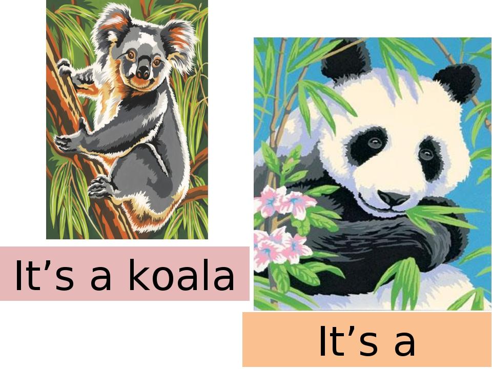 It's a koala It's a panda
