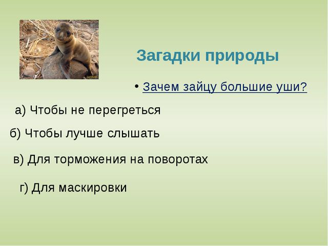 Морские обитатели У кого из этих животных кровь голубая? б)У осьминогов а) У...