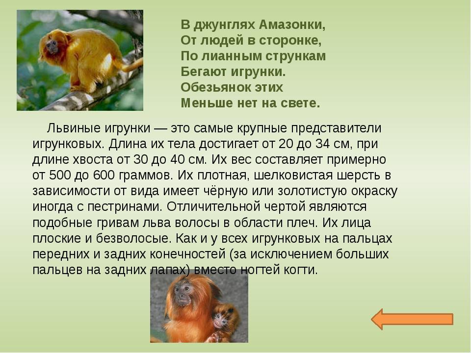 Лесные жители Пушной зверек размером с ежа, с удлиненной мордочкой, заканчива...