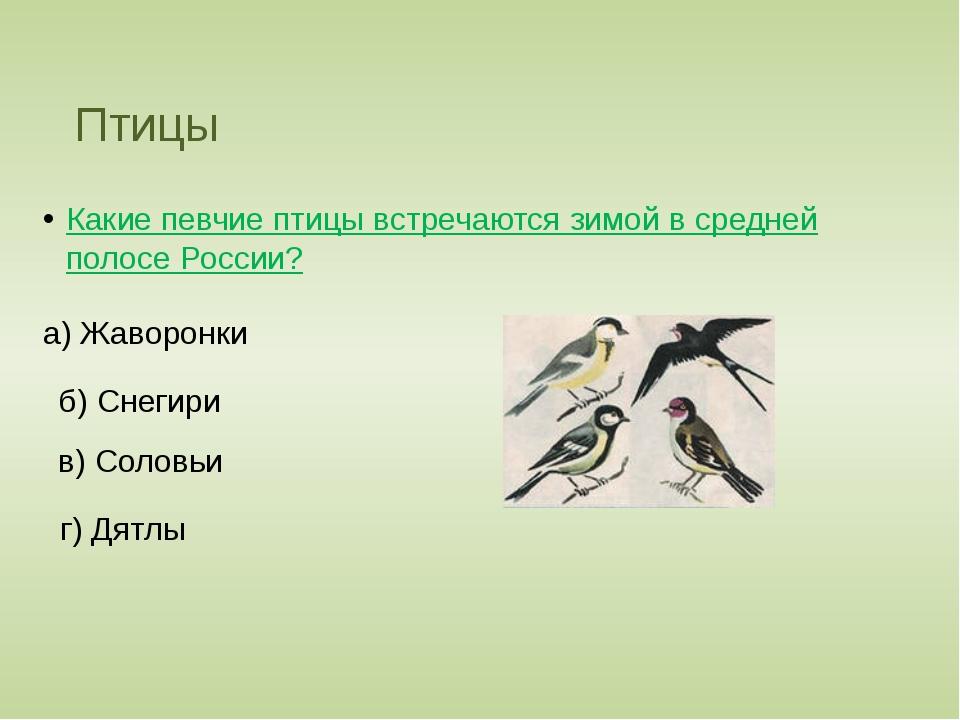 Птицы Какие певчие птицы встречаются зимой в средней полосе России? а) Жаворо...