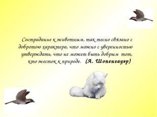 Сострадание к животным, так тесно связано c добротою характера, что можно c у
