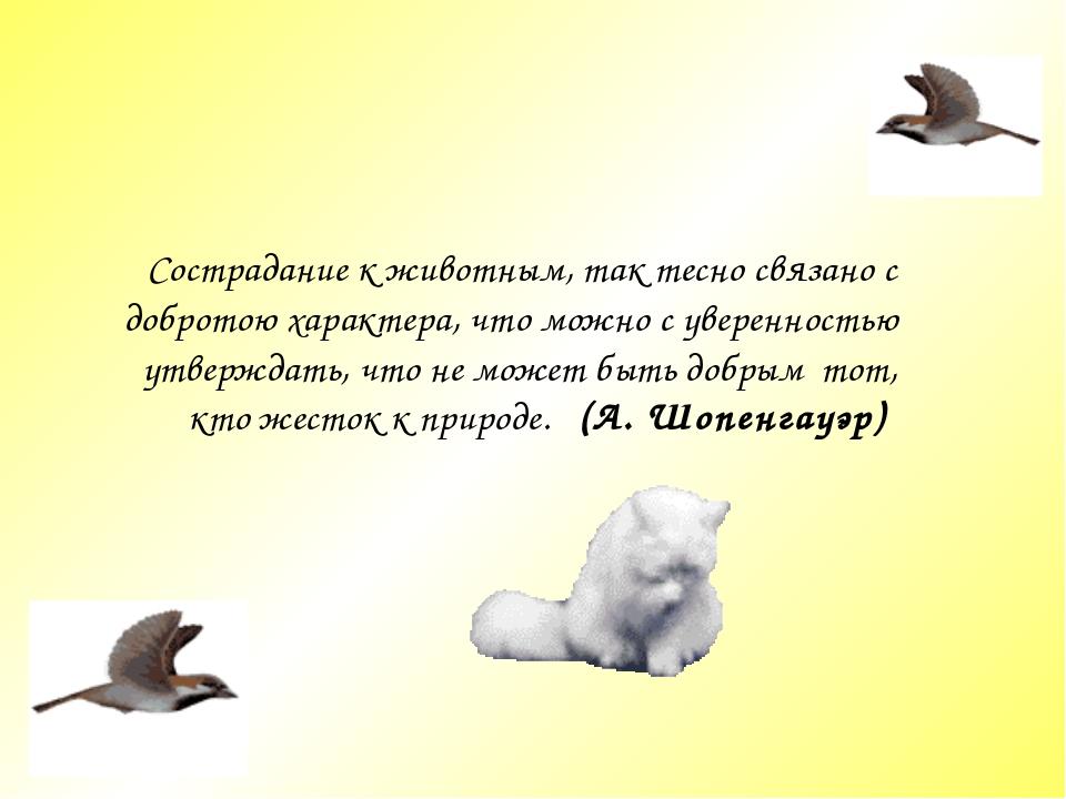 Сострадание к животным, так тесно связано c добротою характера, что можно c у...