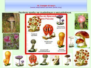 VII. Станция «В лесу!» (знания лекарственных растений, грибов, ягод.) Раздел