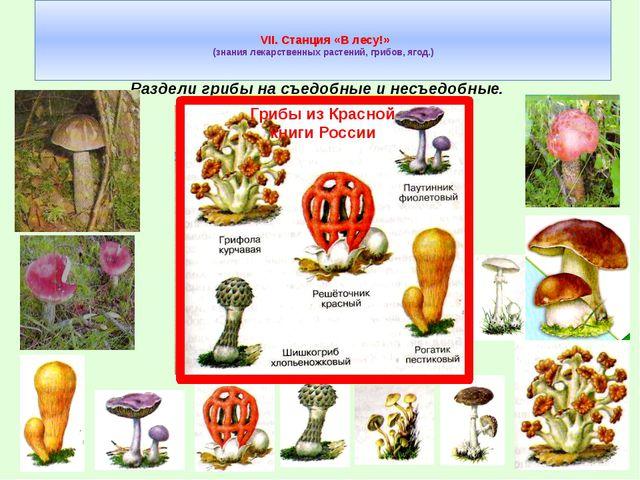 VII. Станция «В лесу!» (знания лекарственных растений, грибов, ягод.) Раздел...