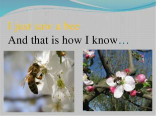 I just saw a bee And that is how I know…