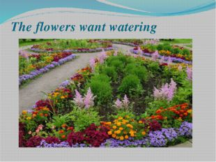 The flowers want watering