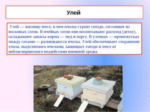 Улей Улей — жилище пчел; в нем пчелы строят гнездо, состоящее из восковых сот