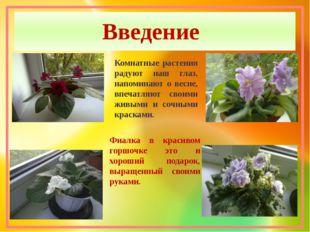 Введение Комнатные растения радуют наш глаз, напоминают о весне, впечатляют с