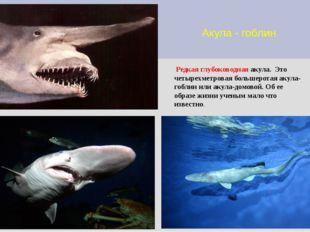 Акула - гоблин Редкая глубоководная акула. Это четырехметровая большеротая ак