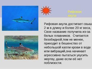 Рифовая акула Рифовая акула достигает свыше 2 м в длину и более 20 кг веса, С