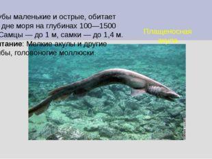 Плащеносная акула Зубы маленькие и острые, обитает на дне моря на глубинах 10