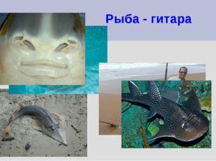 Рыба - гитара