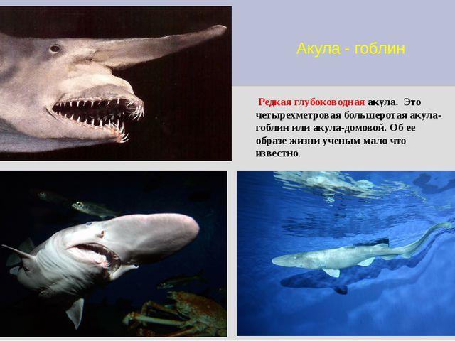 Акула - гоблин Редкая глубоководная акула. Это четырехметровая большеротая ак...