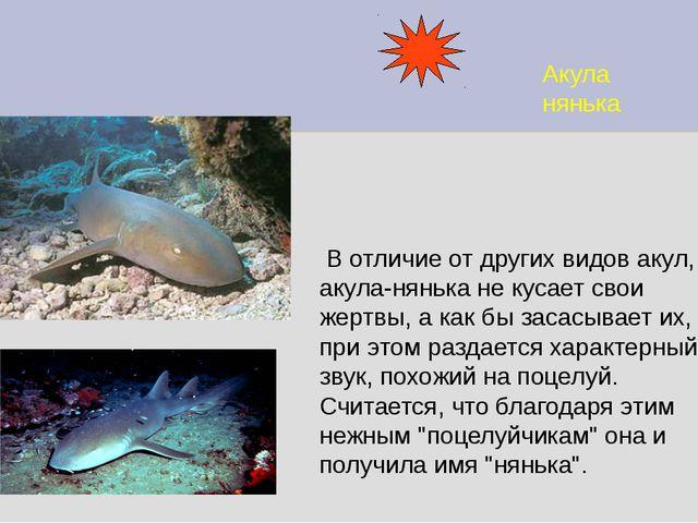 Акула нянька В отличие от других видов акул, акула-нянька не кусает свои жерт...