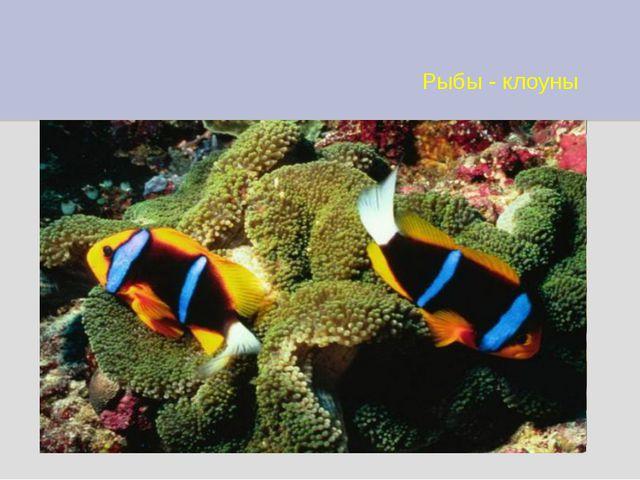 Рыбы - клоуны