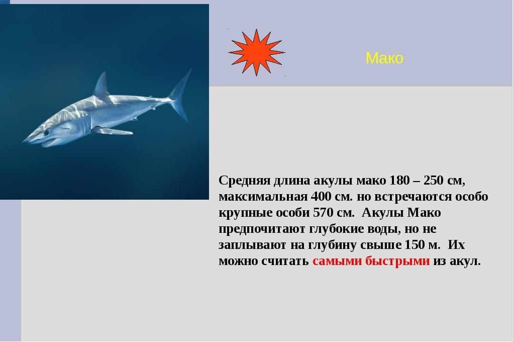 Мако Средняя длина акулы мако 180 – 250 см, максимальная 400 см. но встречают...