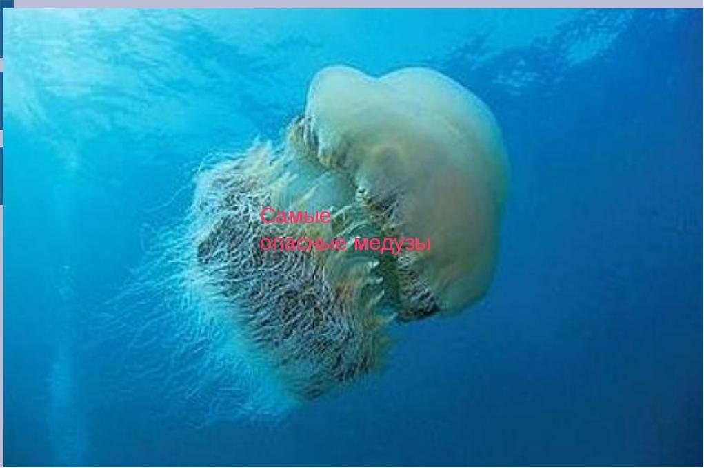 Самые опасные медузы Самые опасные медузы