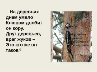 На деревьях днем умело Клювом долбит он кору. Друг деревьев, враг жуков – Эт