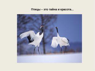 Птицы – это тайна и красота...