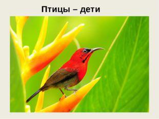 Птицы – дети радуги…