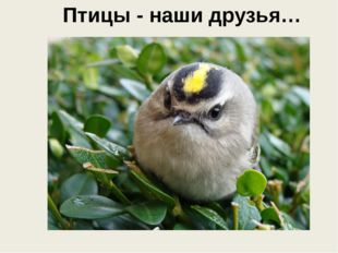 Птицы - наши друзья…