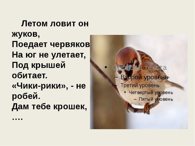 Летом ловит он жуков, Поедает червяков. На юг не улетает, Под крышей обитает...