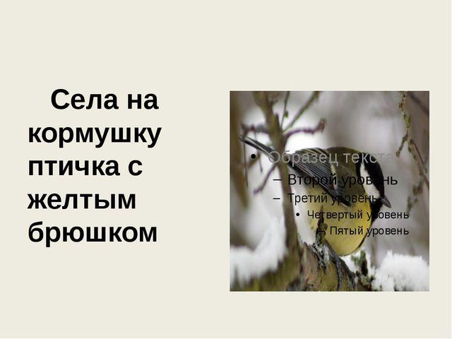 Села на кормушку птичка с желтым брюшком