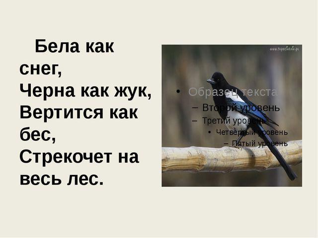 Бела как снег, Черна как жук, Вертится как бес, Стрекочет на весь лес.