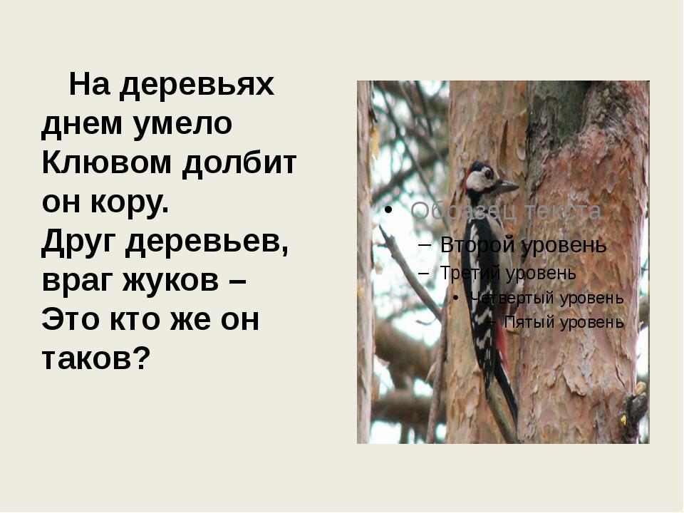 На деревьях днем умело Клювом долбит он кору. Друг деревьев, враг жуков – Эт...