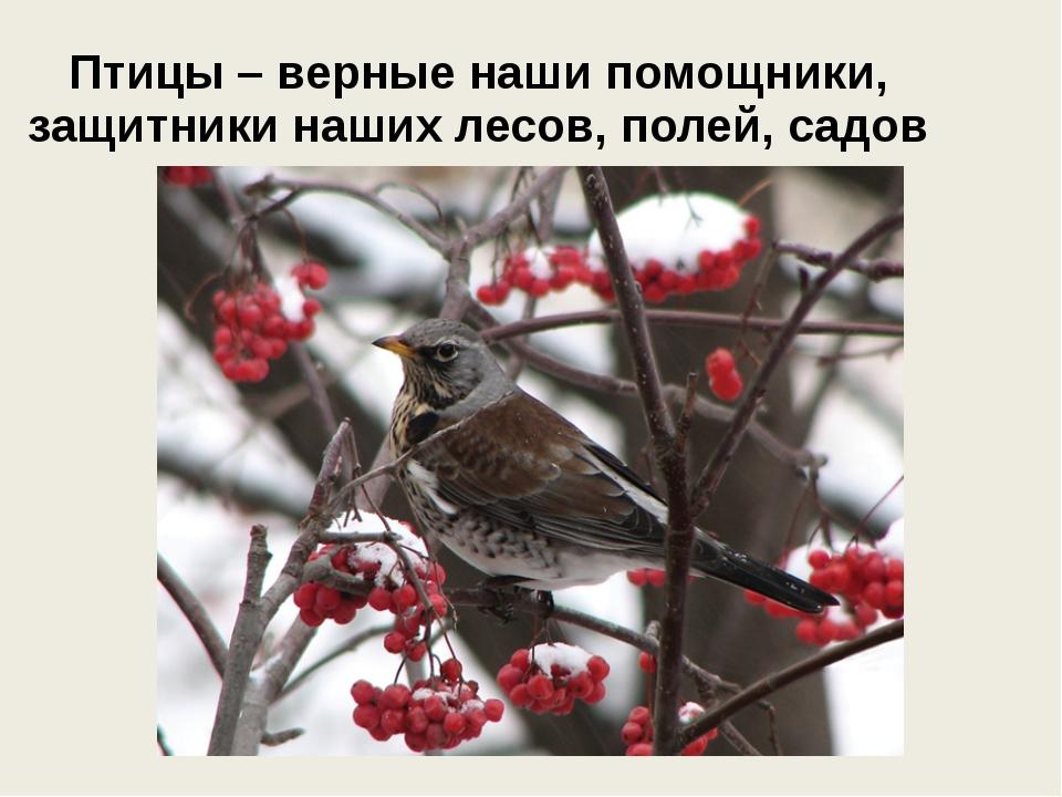 Птицы – верные наши помощники, защитники наших лесов, полей, садов