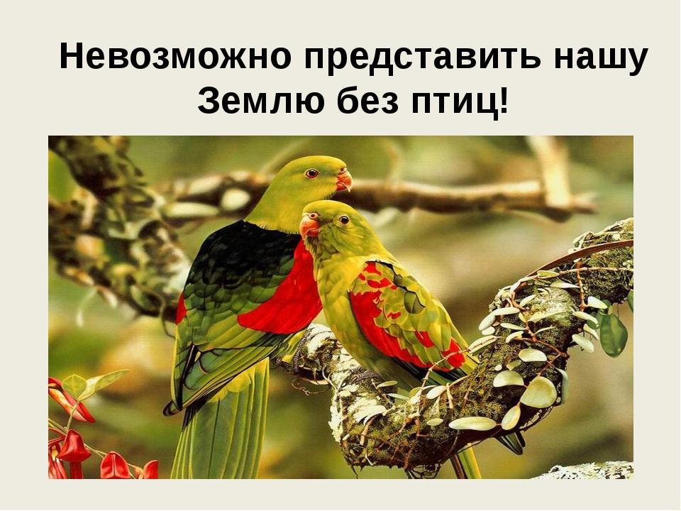 Невозможно представить нашу Землю без птиц!