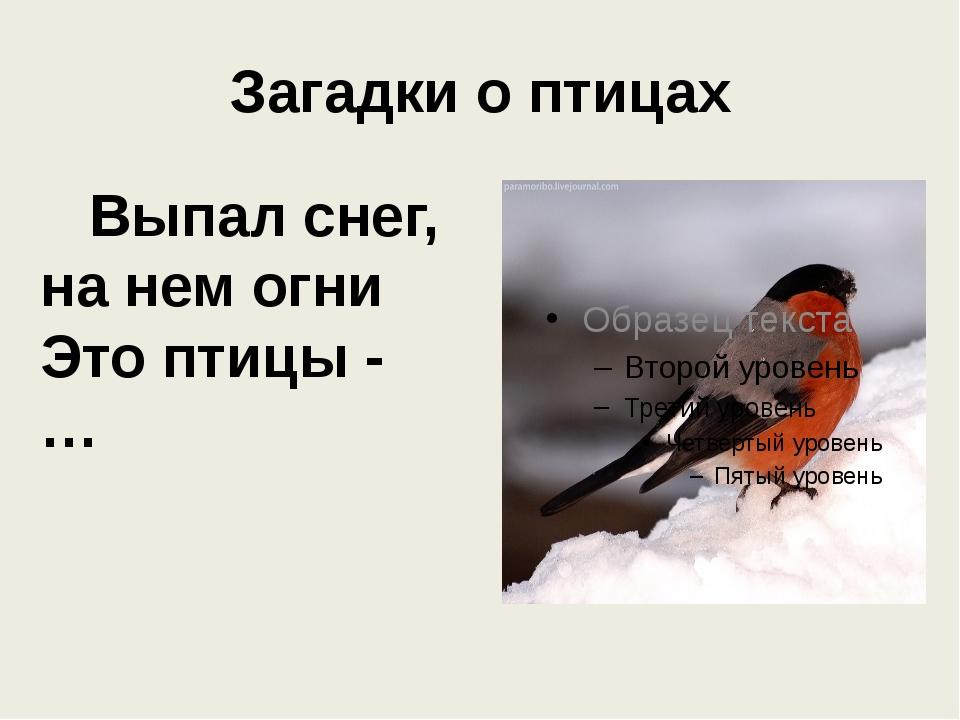 Загадки о птицах Выпал снег, на нем огни Это птицы - …