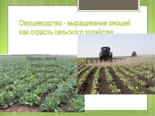 Овощеводство - выращивание овощей как отрасль сельского хозяйства.