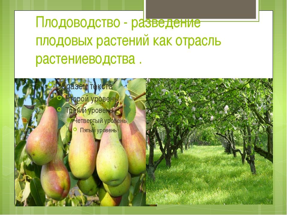 Плодоводство - разведение плодовых растений как отрасль растениеводства .