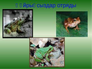 Құйрықсыздар отряды