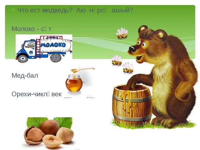 Что ест медведь? Аю нәрсә ашый? Молоко - сөт Мед-бал Орехи-чикләвек