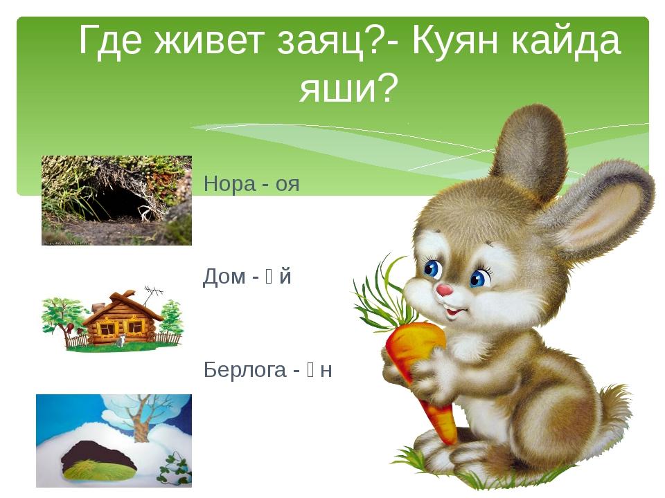Нора - оя Дом - өй Берлога - өн Где живет заяц?- Куян кайда яши?