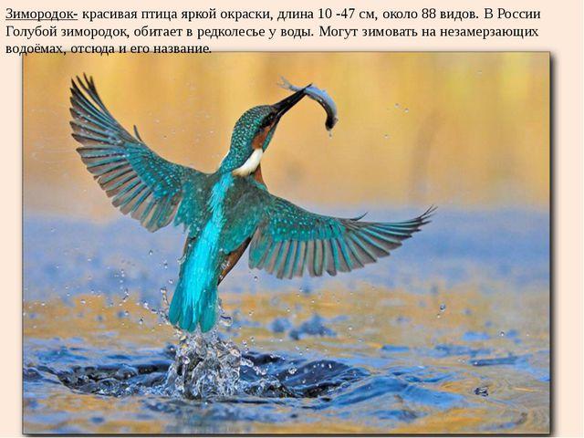 Зимородок- красивая птица яркой окраски, длина 10 -47 см, около 88 видов. В Р...