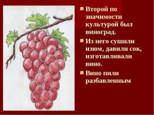 Второй по значимости культурой был виноград. Из него сушили изюм, давили сок,