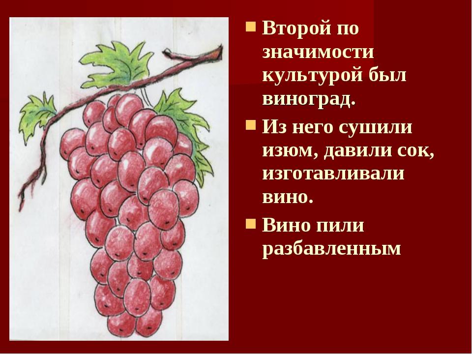 Второй по значимости культурой был виноград. Из него сушили изюм, давили сок,...