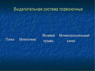 Выделительная система позвоночных Почки Мочеточник Мочевой Мочеиспускательны