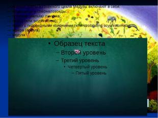 Основные этапы жизненного цикла Медузы включают в себя: — яйцеклетки и сперма